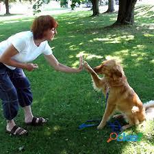 Curso peluqueria y educacion perros con prácticas, matrícula gratis.