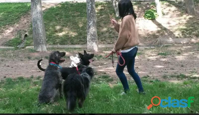 Cuidadora de perros en terrassa (4 años de experiencia)