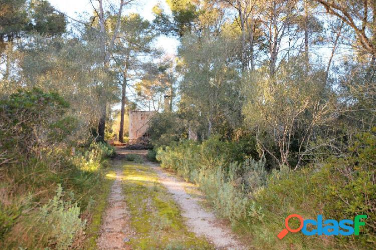 Casa de sueño con bosque propio