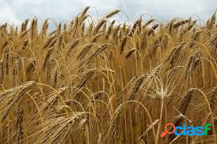 Finca agrícola de 10 ha termino municipal de capdesaso