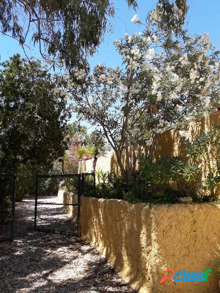 Bonito e interesante campo en los alforines -la romaneta