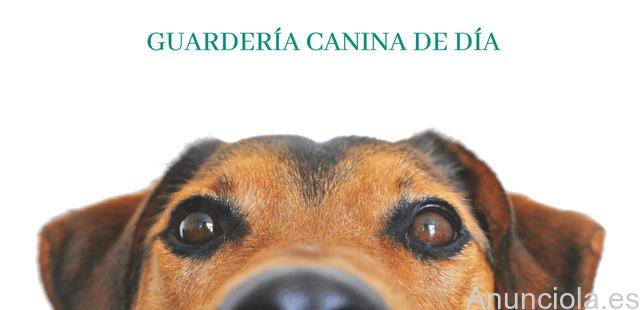 Guardería canina madrid
