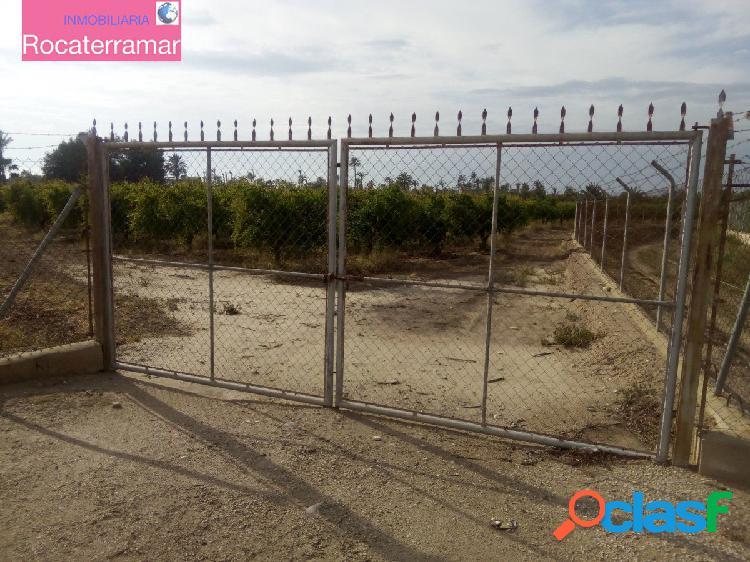Terreno de 7000 m2 con plantados