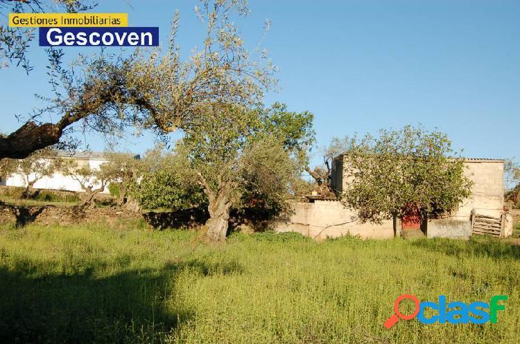 Venta olivar zona residencial