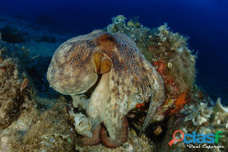 Bautizo de buceo en tossa de mar