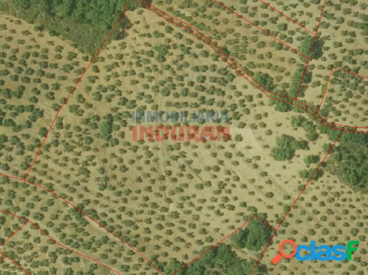 Finca agrícola de 10,5 ha con 700 olivos, para producción de aceitunas destinadas a aceite, y 200 alcornoques aproximadamente, para producción de corcho, situada en el término municipal de ca