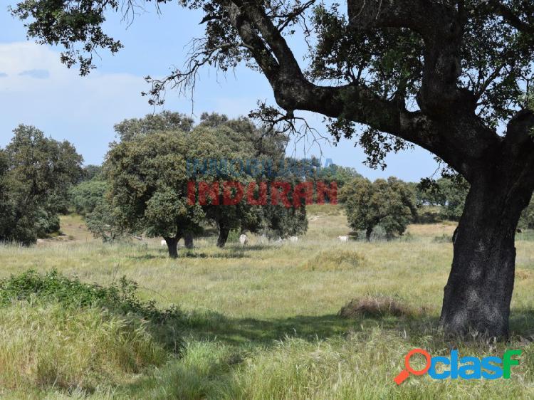 Finca rústica de 3,5 ha con encinas situada junto a la carretera de talayuela en el término municipal de navalmoral de la mata (cáceres)