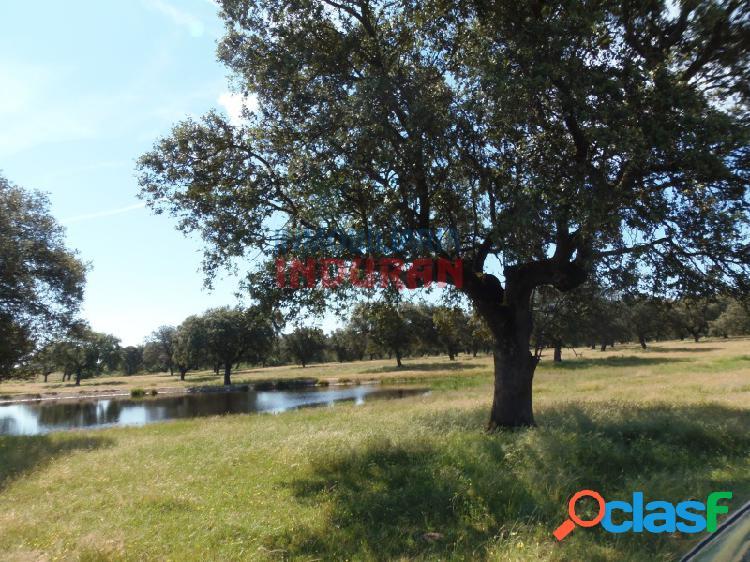 Finca de 555 ha, ideal para uso ganadero y con superficie para regadío, situada en el término municipal de casatejada (cáceres, extremadura)