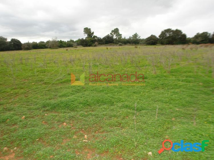 Terreno edificable a la venta en porreras.
