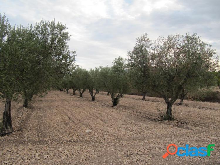 Parcela de 14676 m2 con 300 oliveras instaladas de riego por goteo.