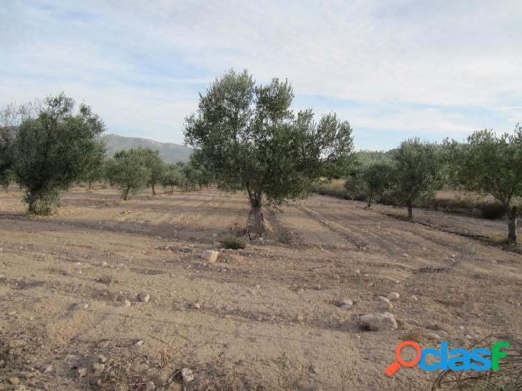 Parcela de 19283 m2. con 400 oliveras instaladas de riego por goteo.