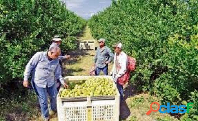 Esplendida finca rústica con casa, balsa,etc..de 150 hectareas con limones verna y mandarinas afure