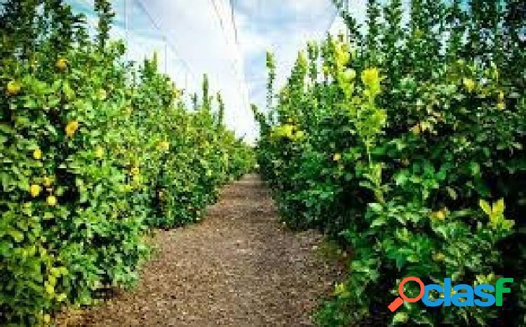 Finca rústica de 21,3 hectareas, plantada el 70% de naranjas y el 30% de limones.