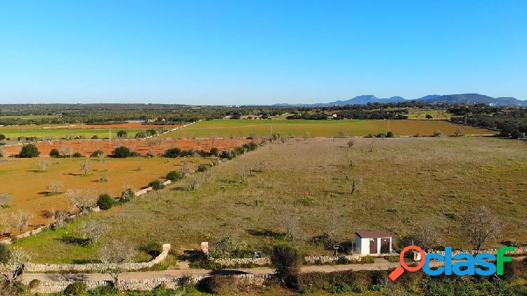 Terreno rústico de 14.600 m2 con licencia cerca de ses salines