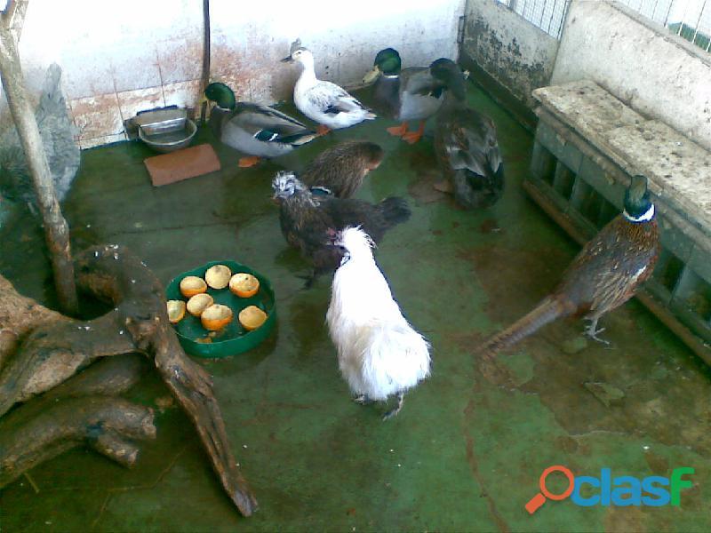 ADOPTAMOS PAJAROS y ALGUNOS ANIMALES. 8