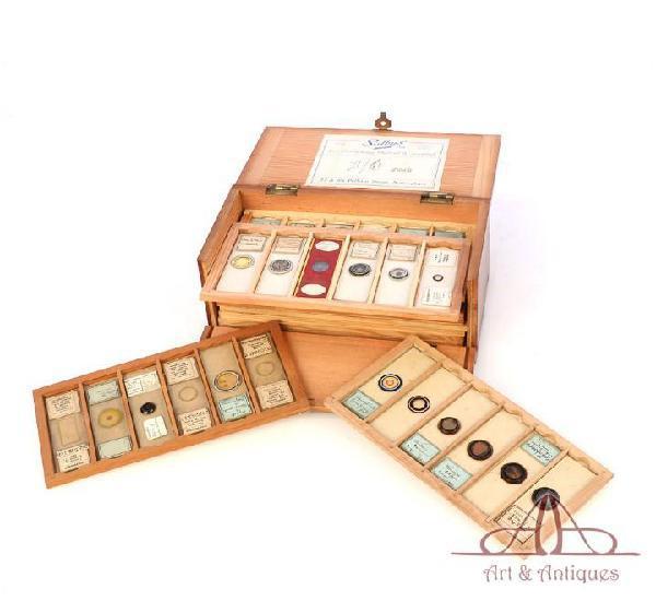 Colección de 60 preparados antiguos para microscopio.