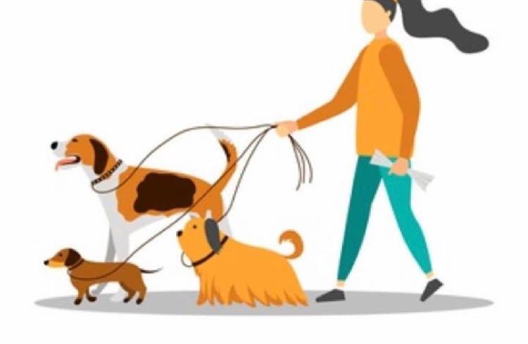 Cuidadora animales