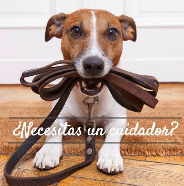 Cuidadora perros