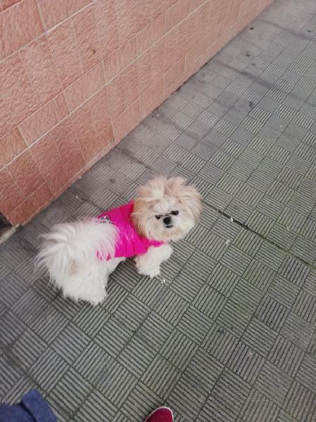 Paseo perros y cuido a tus peludos si te vas