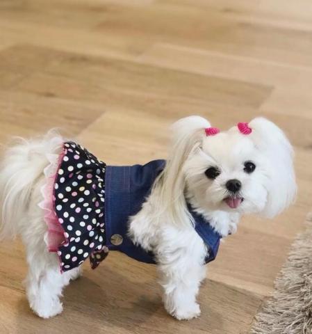 Gratis. lindos cachorros malteses