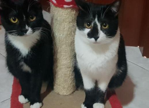 Blanquitas y negras , 5 meses, en adopción