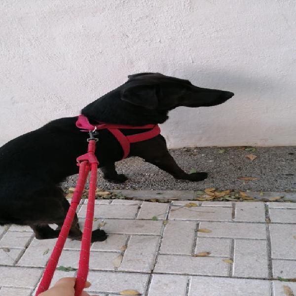 Paseadora de perros/ dog walker
