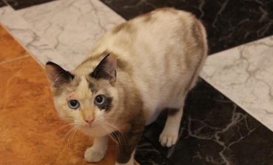 Regalo gatita. es muy urgente.