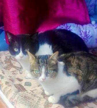 Zipi zape gatos adopción villanimal
