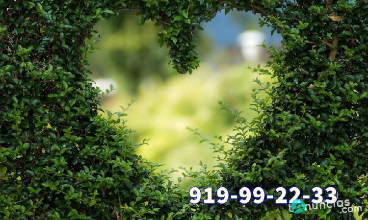 Videncia del amor y de la pareja 24 horas