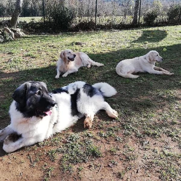 Residencia canina sin jaulas