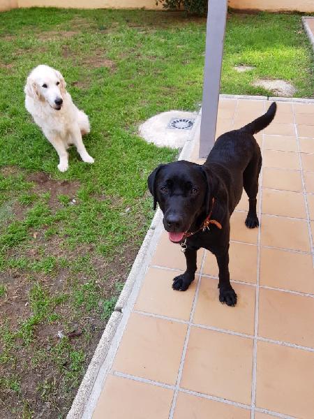 Cuidadora canina