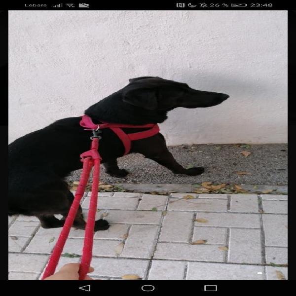 Paseadora de perros/dog walker