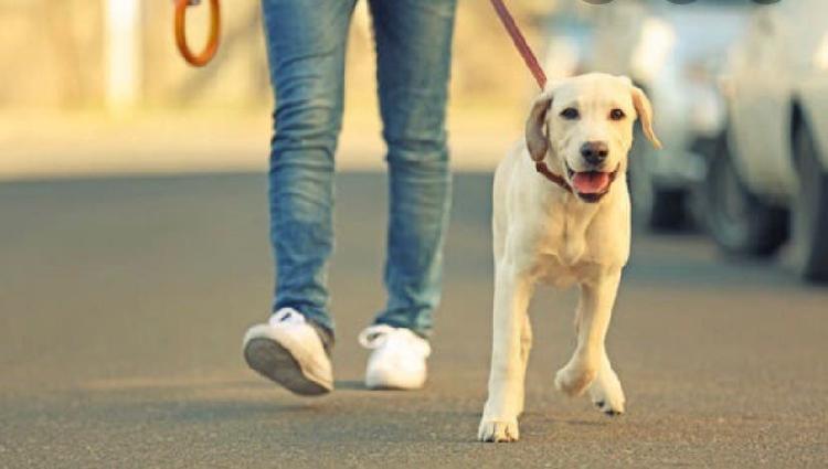 Paseo perros de tarde