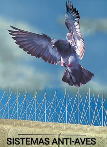 Sistema anti - aves // antipalomas