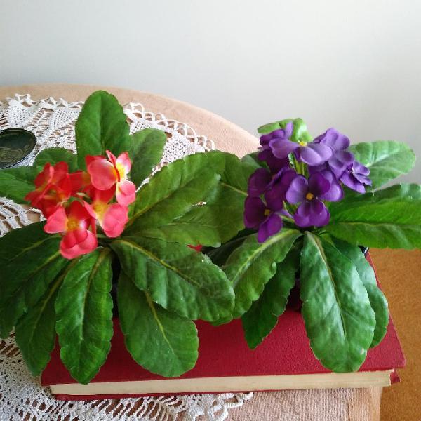 Dos plantas.