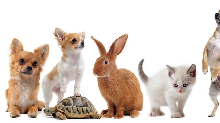 Guardería canina y otros animales