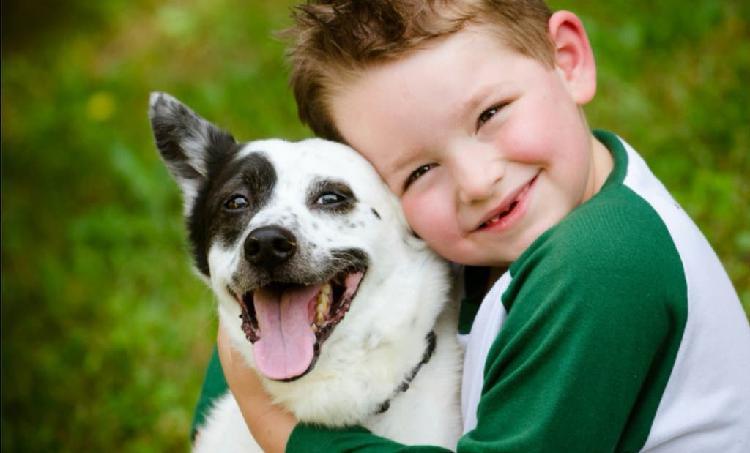 Niñera, cuidado del hogar y de mascotas