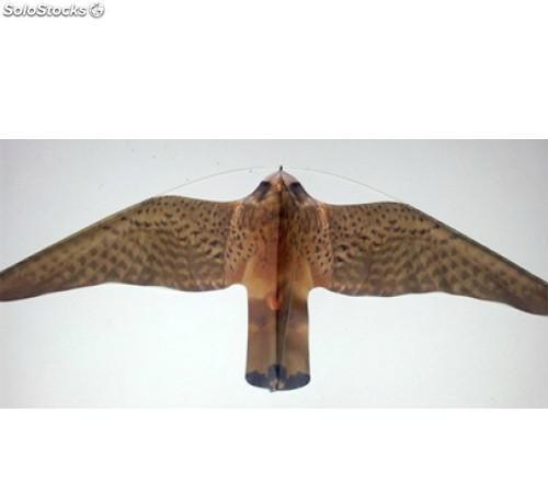 Eolo halcón espantapájaros