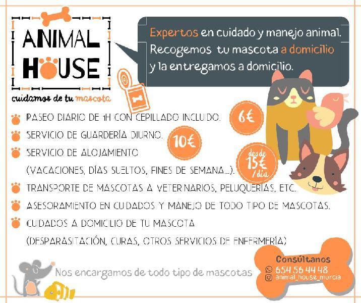 Paseos y guardería canina y animal