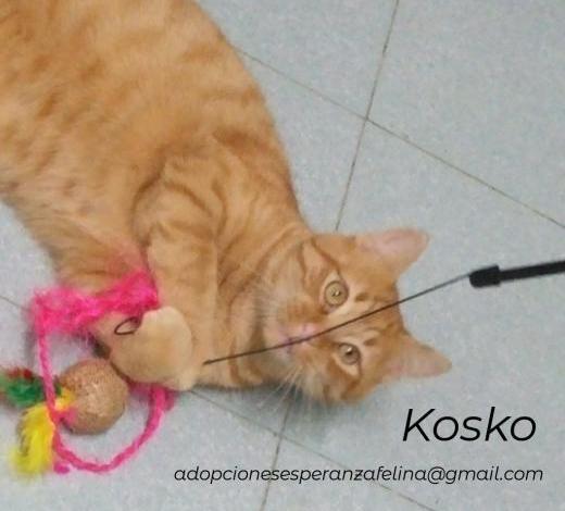Kosko en adopción (álava-españa)