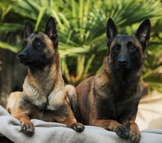 Adiestrador canino navarkan