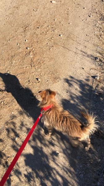 Paseadora de perros en carabanchel bajo