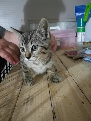Regalo gatitos muy cariñosos
