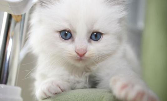 gatitos de trapo