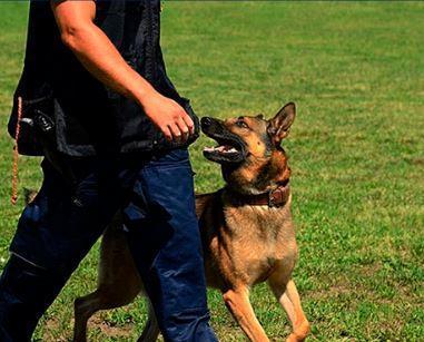 Curso adiestrador canino n2 y n3