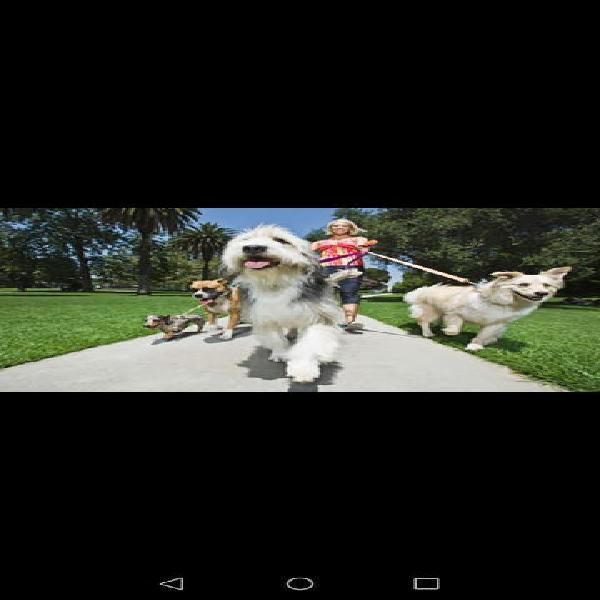 Cuidadora de animales y paseadora de perros