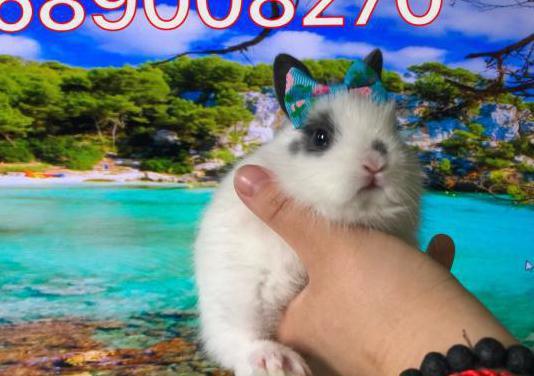 Conejos super toys 689008270 padres con certificad