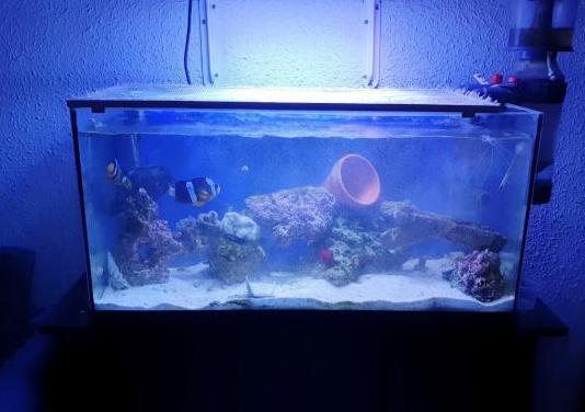 Acuario marino 96 litros completo