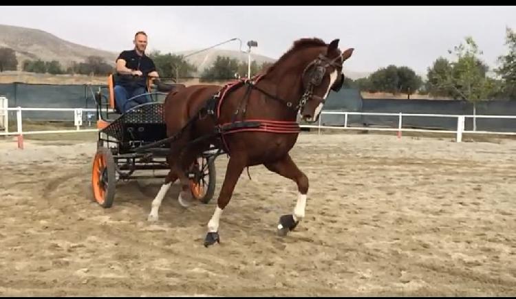 Domo potros y monto caballos a domicilio