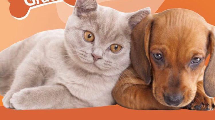 Paseador cuidador de mascotas, perros,gatos
